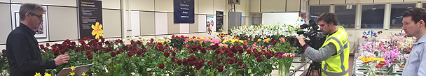 tf1_flower_auction_aalsmeer.jpg