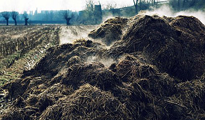 New manure legislation: processing obliged, France profits