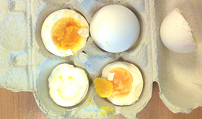 An egg against blindness, unique Dutch research