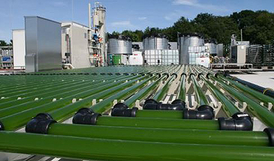 The use of algae for fuel, food, cosmetics and paint almost cost-effective