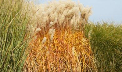 Ukraine should quickly start to produce energy from bio mass