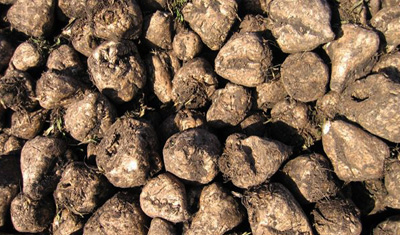 AkzoNobel and partners investigating production of plastics from sugar beets